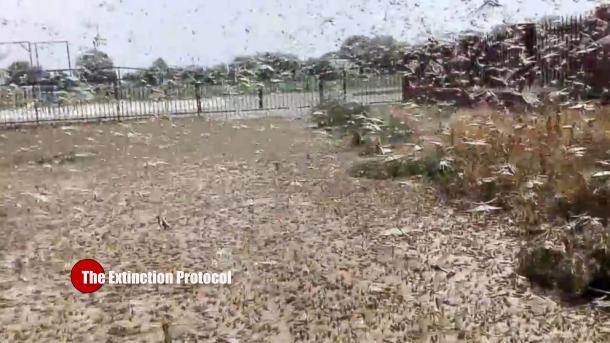 Locust plague Russia
