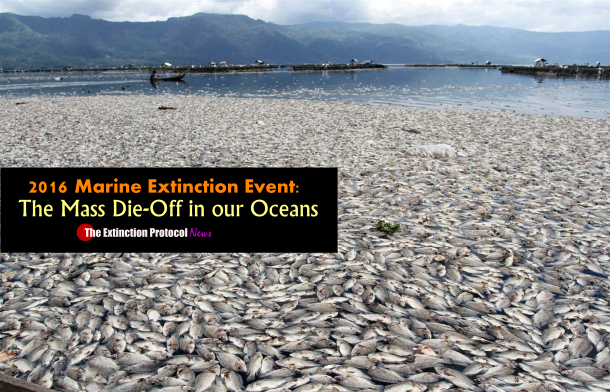 Marine die-offs accelerate across the globe – and no one seems to know why Ele-marine-die-off