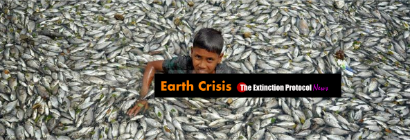 Marine die-offs accelerate across the globe – and no one seems to know why Fish-k