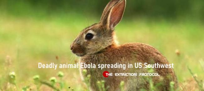 Bunny Ebola